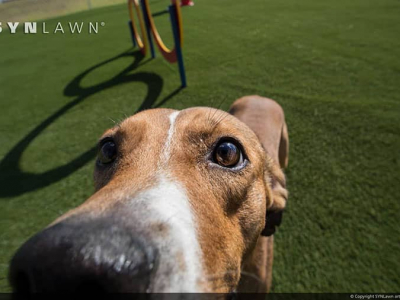 08-humane-society-of-st-lucie-county-synlawn-artificial-grass